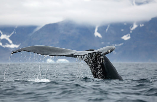 Orca Adventure