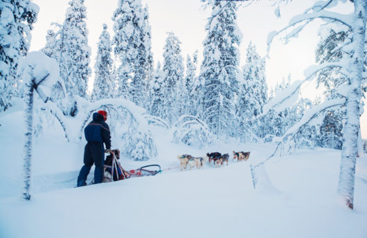 dog sledding holiday