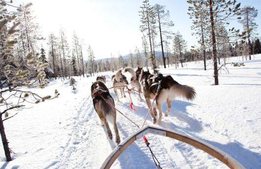 Husky tour at Kakslauttanen Igloo Village
