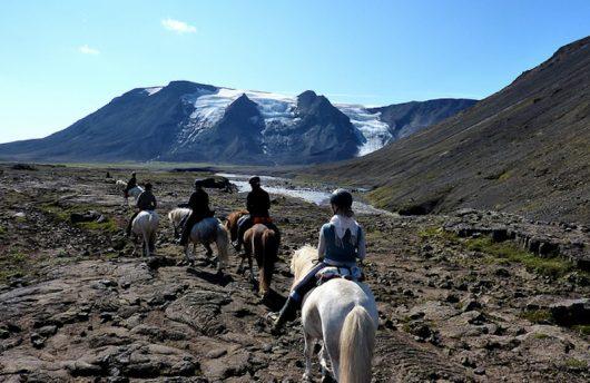arctic-horse-experience