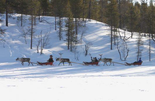 reindeer safari during Kakslauttanen Deluxe Package