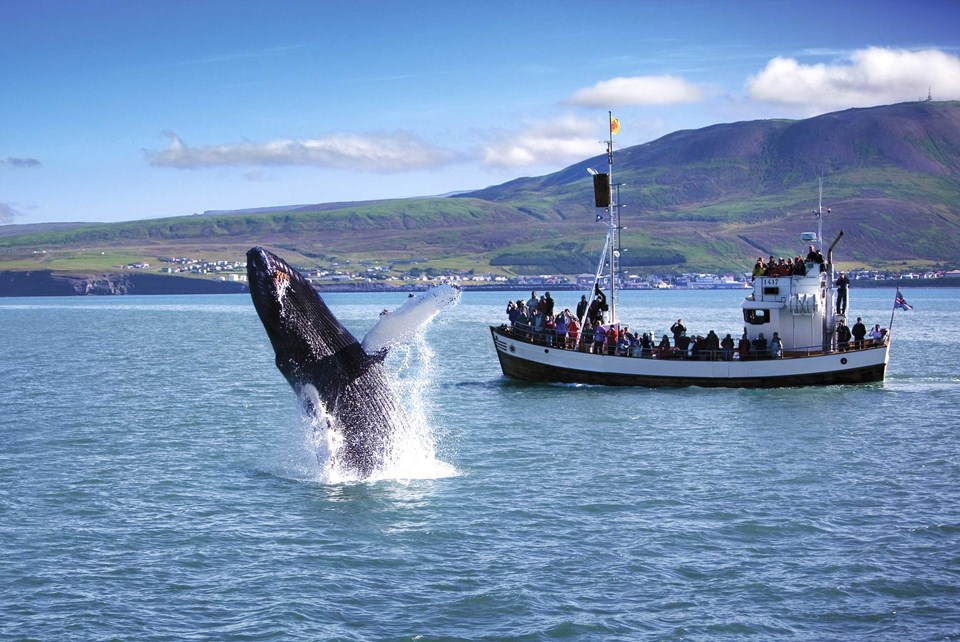 Breathtaking Iceland. Part 5: Whale watching and a spot of